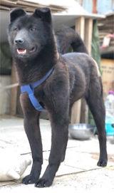【悲報】韓国の大学キャンパス内で飼育されていた犬の末路・・・・・のサムネイル画像