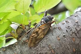 【驚愕】川口市「食用を目的としたセミの幼虫等の捕獲はやめて」→ その内容がwwwwwwwwwwwwwwwwwwwwのサムネイル画像