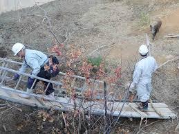 【悲報】イノシシ砂防ダム転落、市に「苦情」が殺到していた!→ その内容がwwwwwwwwwwwwwwwwwのサムネイル画像