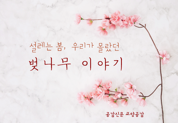 【恒例】 韓国「桜論争」の季節到来へwwwwwwwwwwwwwwwwwwwwwのサムネイル画像