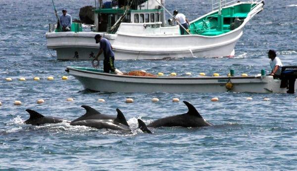 【速報】今日イルカ漁解禁!!!→「シー・シェパード」が日本に乗り込んだ結果wwwwwwwwwwwwwwwwのサムネイル画像