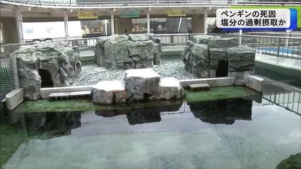 【姫路】水族館さん、とんでもないミスによりペンギンたちを死なせてしまう・・・・・