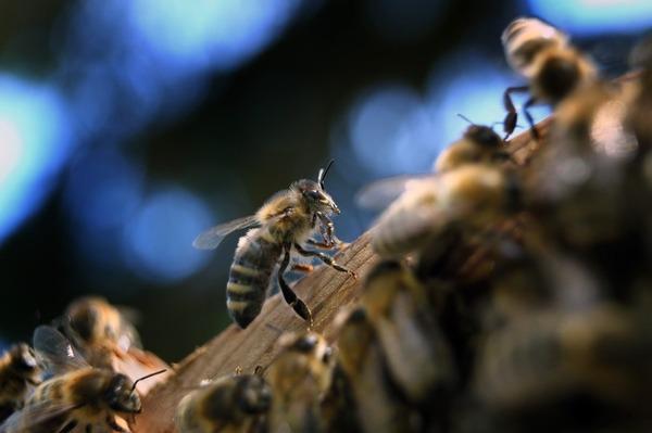 【衝撃】ドイツ政府「殺虫剤は昆虫への虐待だ!!!」→その結果wwwwwwwwwwwwwwwwwwwのサムネイル画像