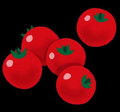 【愕然】熊本でミニトマトが大量に盗まれる・・・!!!!!!