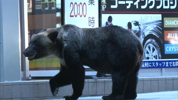 """【北海道】札幌市「クマ駆除」への""""苦情""""がヤバいことにwwwwwwwwwwwwwwwwwwwwwwwwwのサムネイル画像"""