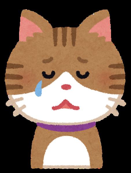 【戦慄】猫100匹を空気銃で殺したアルバイト(49)、供述がヤバすぎ・・・・・・のサムネイル画像