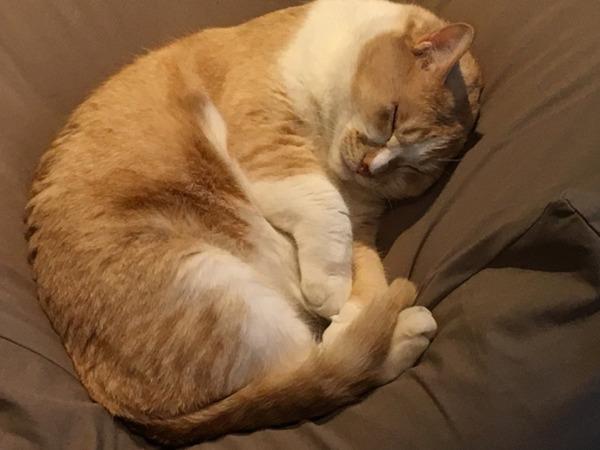 【動画】猫さん「この餌やり器、タックルすればいくらでもゴハンが出てくるにゃ」→ その結果wwwwwwwwwwwwwwwのサムネイル画像