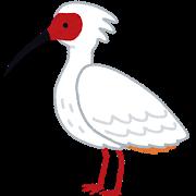 bird_toki