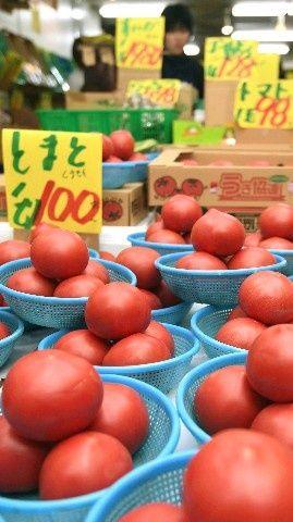 【朗報】今年のトマト、安すぎる → 【悲報】農家さん、悲鳴を上げるのサムネイル画像