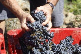 【驚愕】 在仏の日本人ワイン農家夫婦に退去命令 → その理由が・・・のサムネイル画像