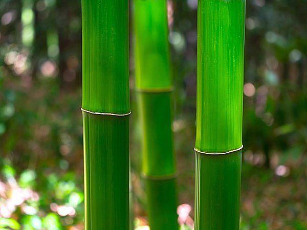 【悲報】イギリス、庭に「竹」を植えるブーム到来!!!→ その結果wwwwwwwwwwwwwwwのサムネイル画像