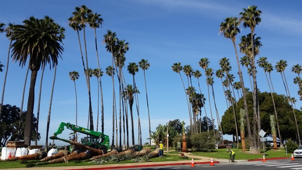 Opening Photo for Palisade Park Improvements