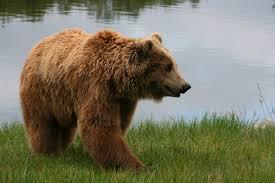 【驚愕】国「あのヒグマを駆除して」猟友会「はい(バーン」→ その結果wwwwwwwwwwwwwwwのサムネイル画像
