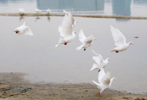 中国で結婚式に100匹の白い鳩を離した結果wwwwwwwwwwwwww 2ch「まるでゾンビの群れだな 」【画像あり】のサムネイル画像