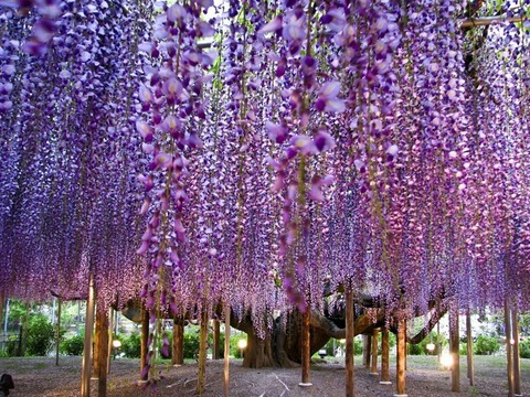 海外で話題!!!「日本の美しい景色」がキレイ 2ch「ラスボスぽい」【画像あり】のサムネイル画像