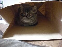 袋入り娘4