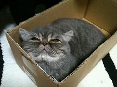 箱入り娘2