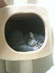 キャットタワーの中で寝ているめかぶ