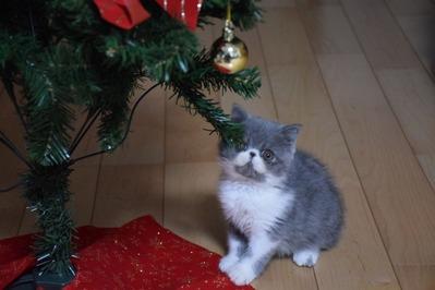 とろろとクリスマスツリー