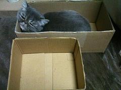 前の箱との大きさ比較