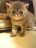 子猫のときの写真