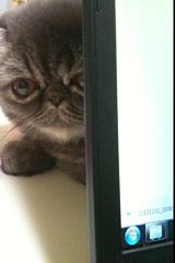 ノートパソコンの後ろに隠れるめかぶ1