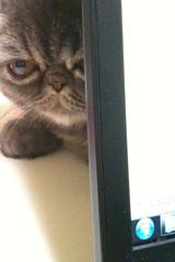 ノートパソコンの後ろに隠れるめかぶ2