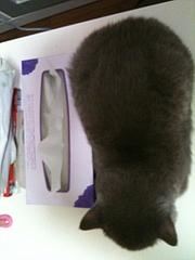 ティッシュの箱との比較