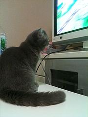 めかぶ テレビ注目