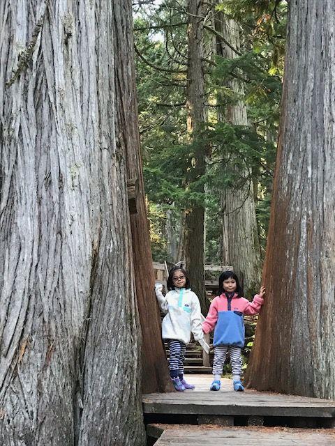 12 巨木