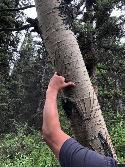 7 クマの爪痕