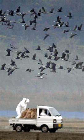 鹿児島県ツル保護会