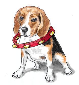 Tambourine Dog