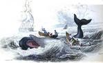19世紀 捕鯨