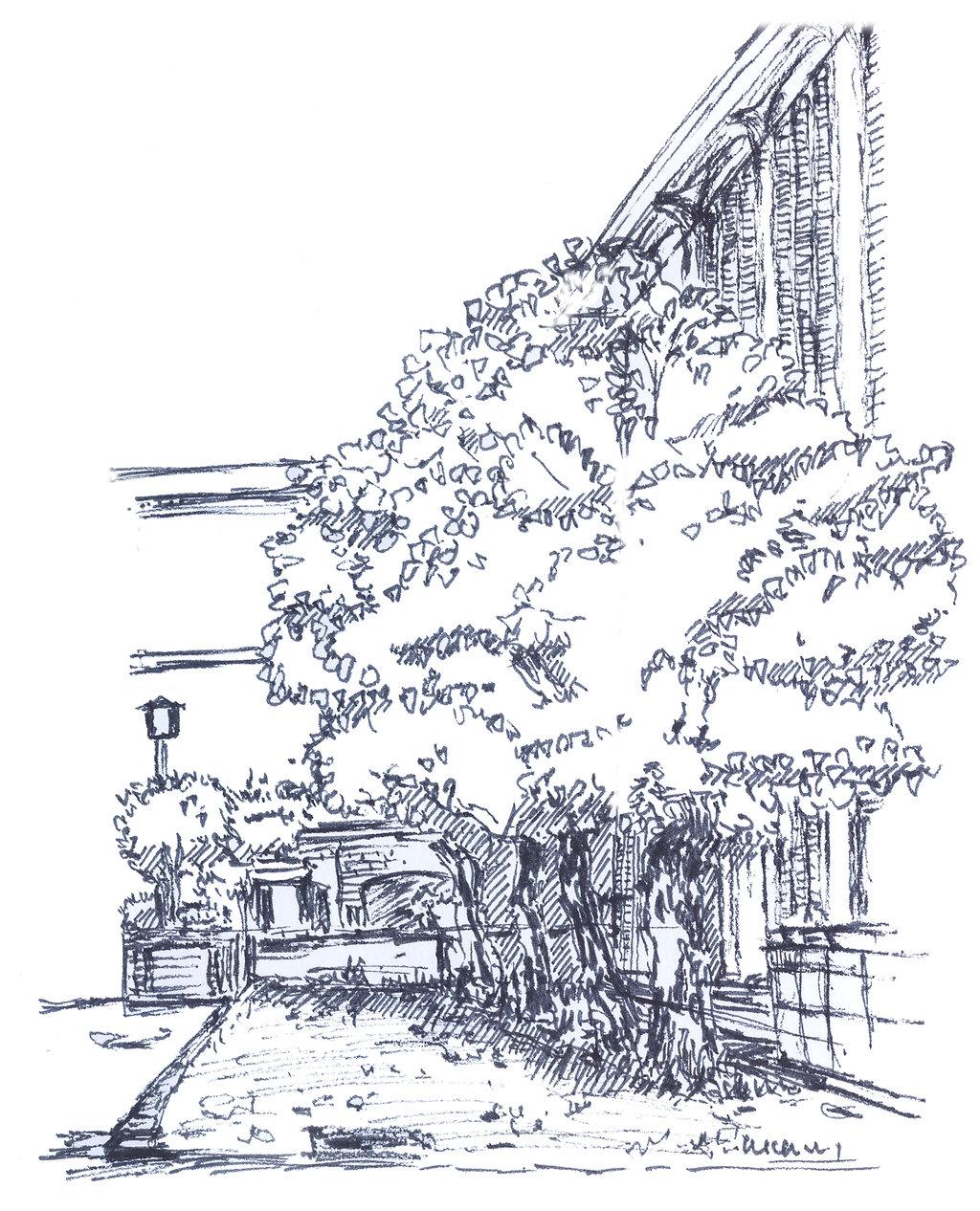 20120818桜美林図書館裏