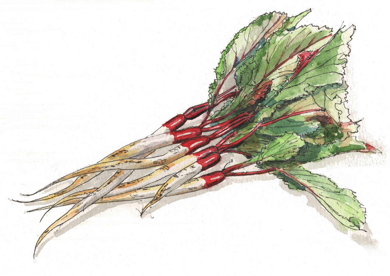 181107_日野菜