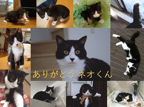 Farewell_Neo-kun_191026