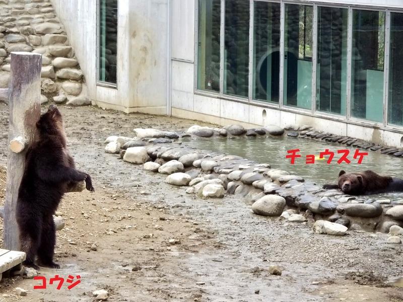 55-180511kohji-tyousuke