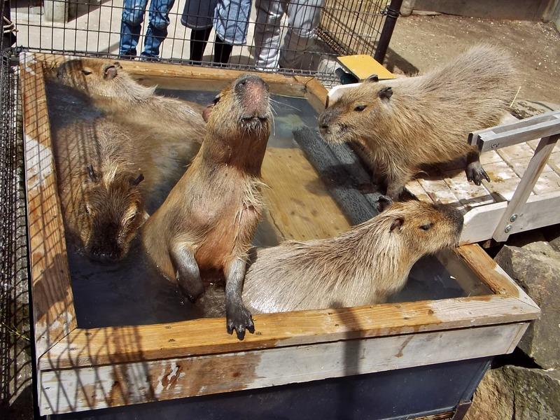 3-180416capybara