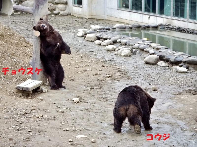 44-180511kohji-tyousuke
