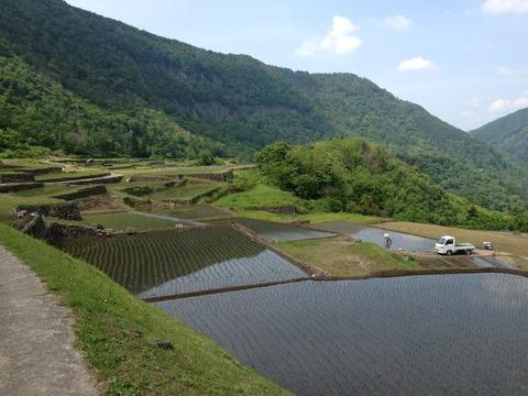 見倉の石垣田 20120604