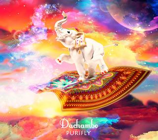 dachambo