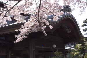 kiyotaki014