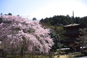 kiyotaki005