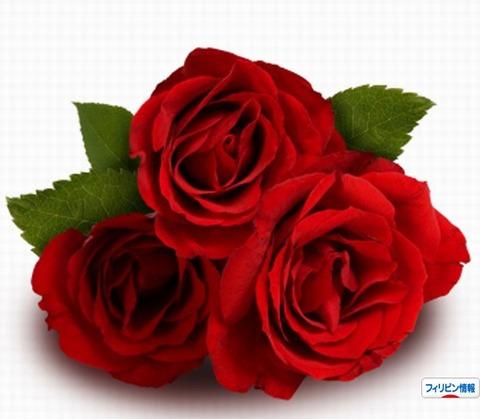 三本の赤い薔薇の意味