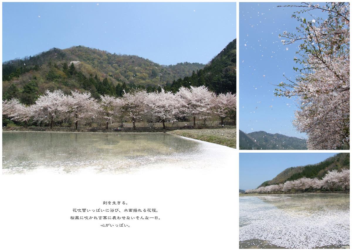 14_桜風