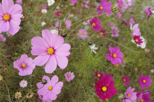 咲くやこの花館004