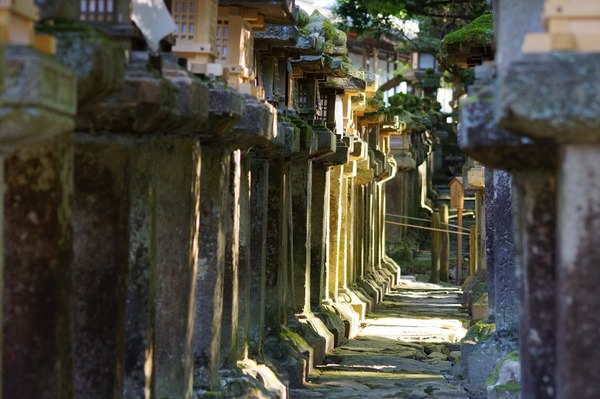 奈良公園024