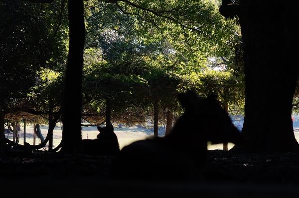 奈良公園019