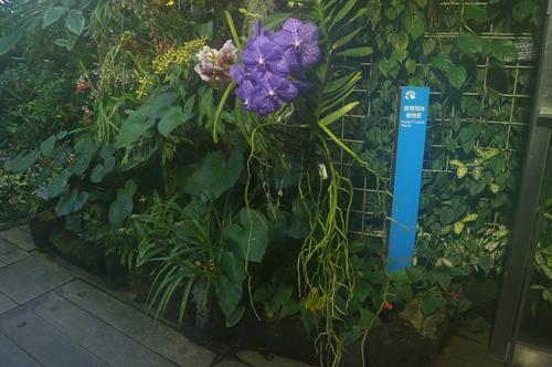 咲くやこの花館008
